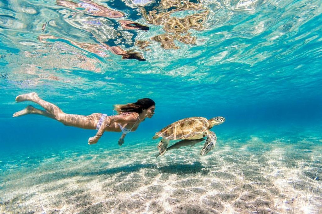 Silvia Caruso Swimming With Caretta 1024x683 - Silvia Caruso Net Worth, Pics, Wallpapers, Career and Biography